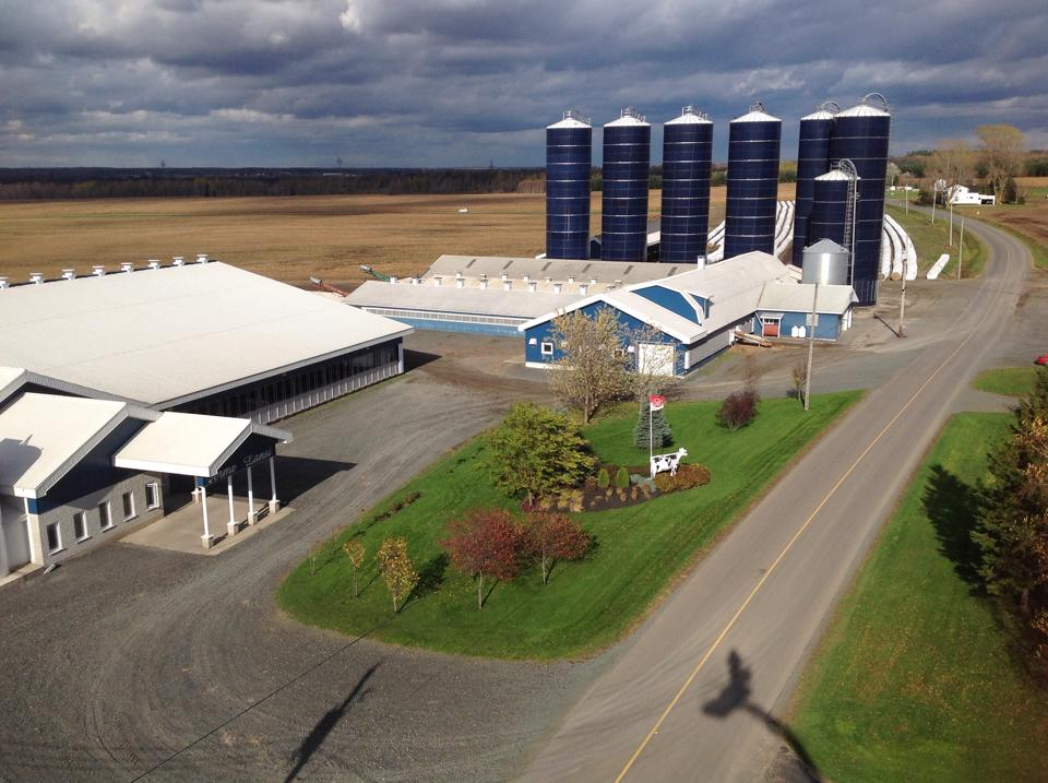 Faster colostrum feeding improves calf health on this dairy farm in Quebec