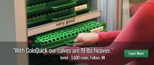 With ColoQuick our calves are 19 lbs heavier