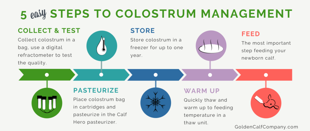 5 step to colostrum management by Golden Calf Company Calf Hero